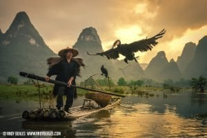 Guilin cormorant fishing releases his cormorant bird into the air during the golden evening light on the Li River in Guilin, China.